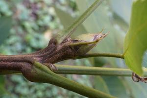 plant_image